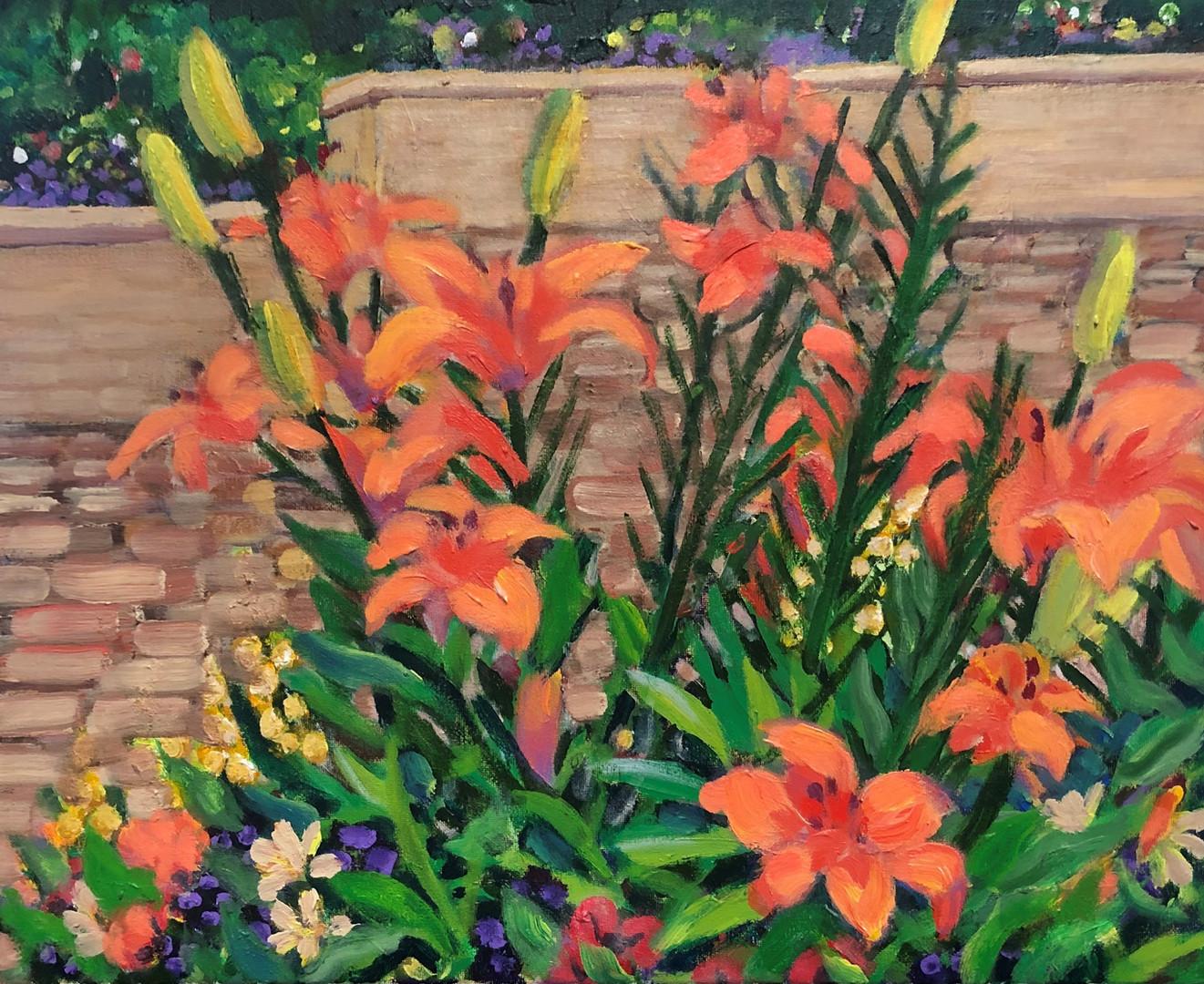 Orange Daylilies On My Path