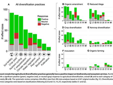 A mezőgazdasági diverzifikáció számos ökoszisztéma szolgáltatást erősít, hozamvesztés nélkül