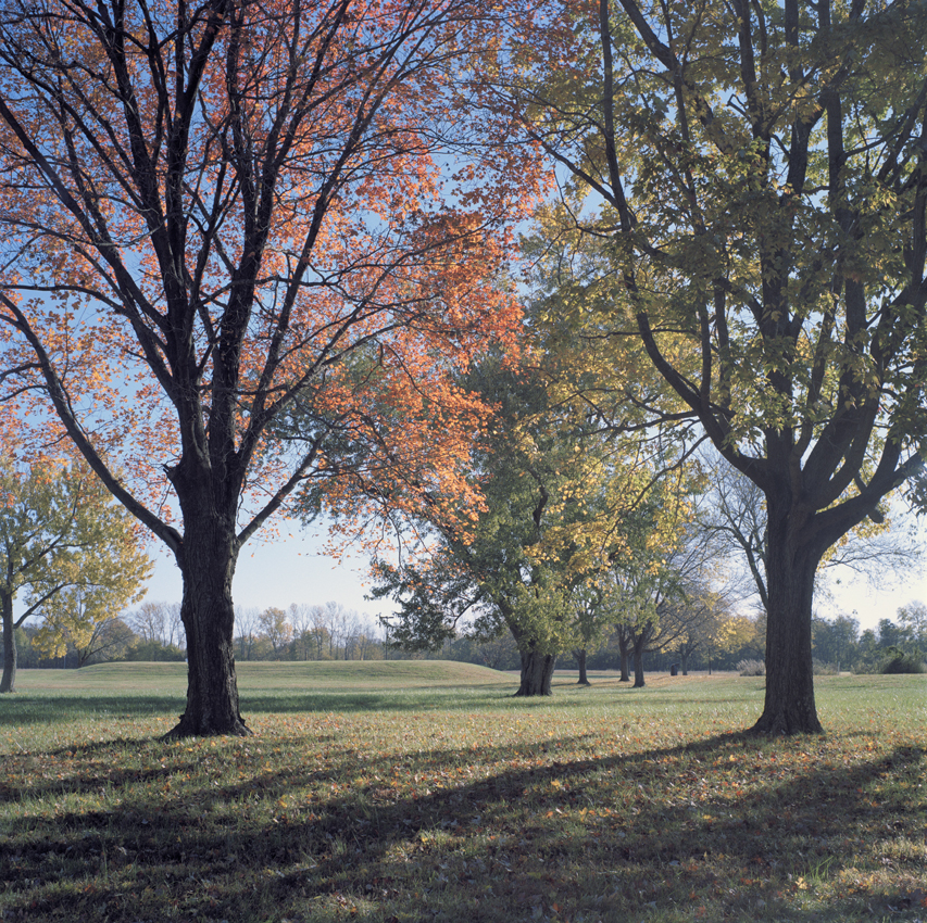 Autumn Tress, with Mound 107