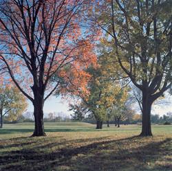 Autumn Tress, with Mound 107