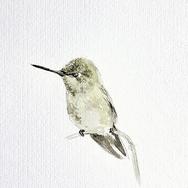 boceto colibrí