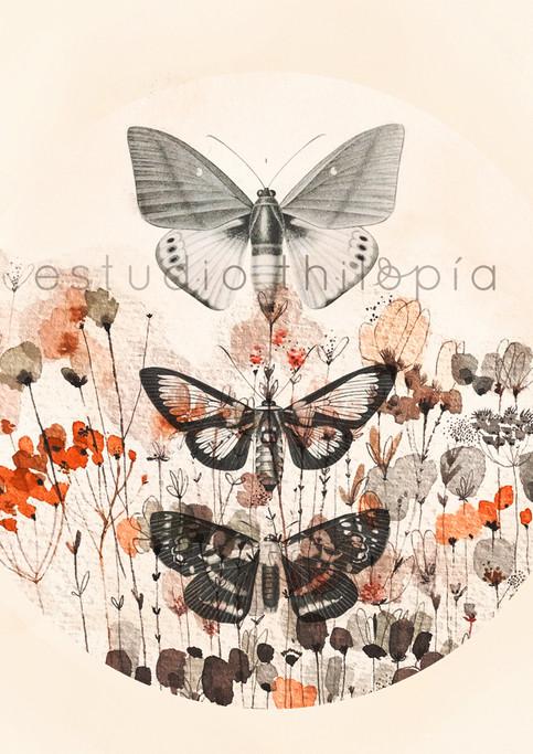 mariposas00