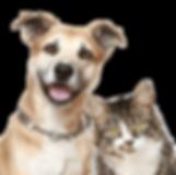 kisspng-dog-cat-puppy-pet-sitting-pet-do