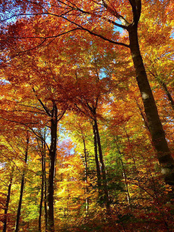 What is the Autumnal Equinox and Why Is It So Important?