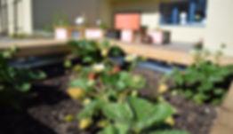 Mobile School Garden 3.jpg