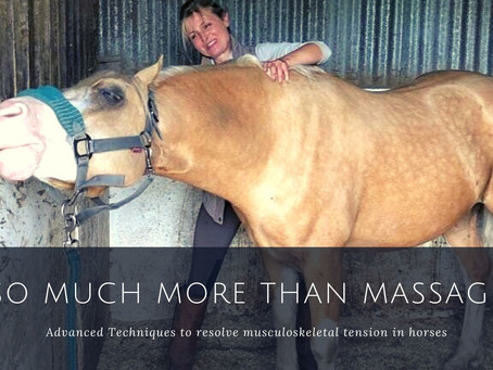 So Much More than Equine Massage