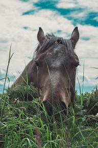 brown-horse-2545234.jpg