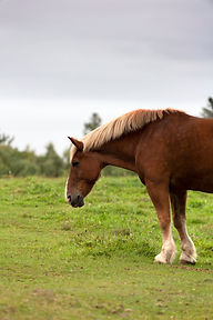 photo-of-horse-on-grass-field-1478631.jp
