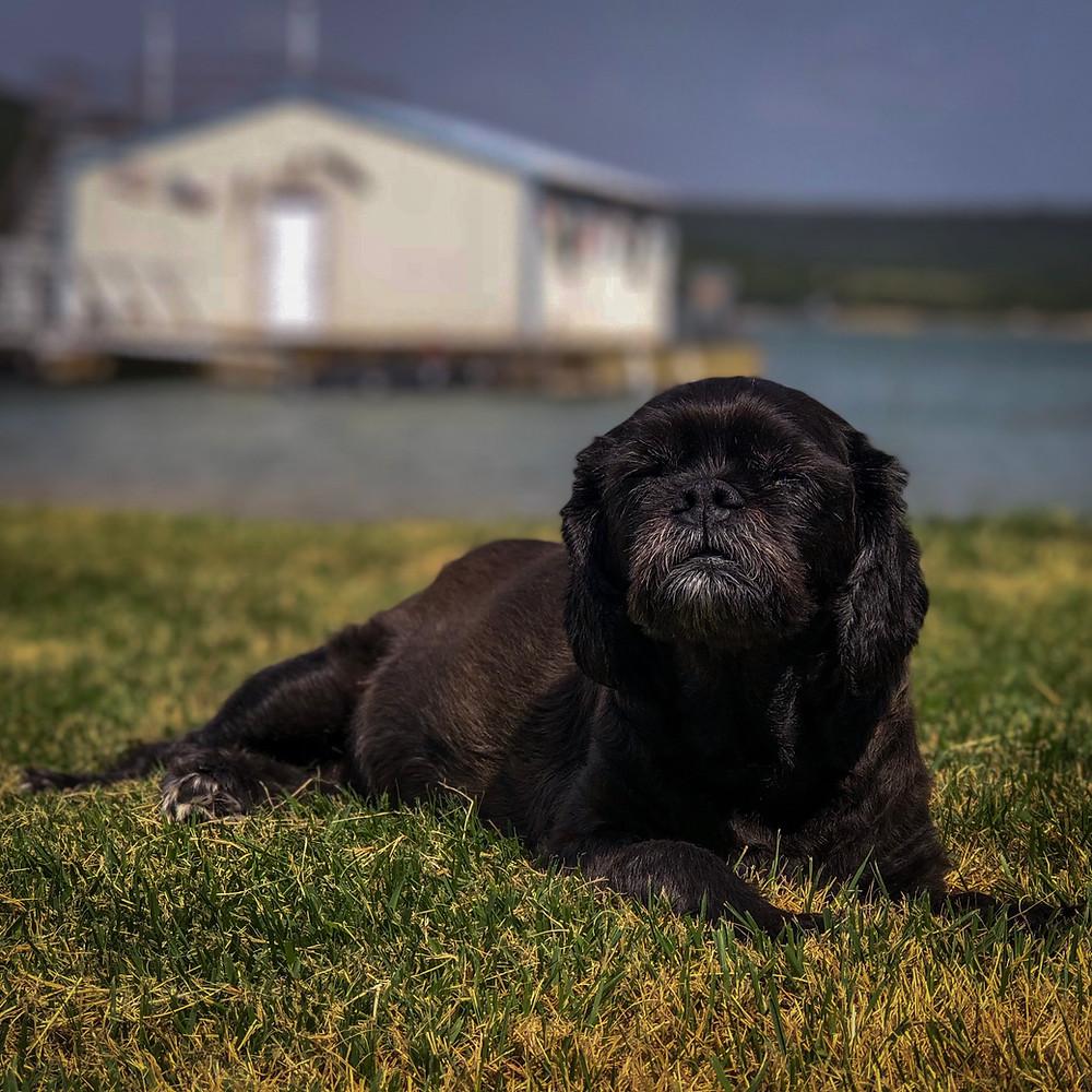 Sophie a small black dog resting at Possum Kingdom Lake