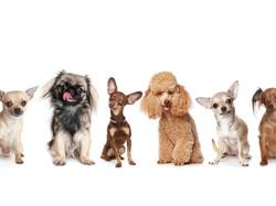 Стрижка собак в Ухте от 1000 руб.