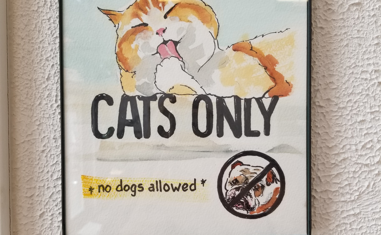 Cats Only Exam Room