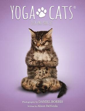 yoga cats.jpg