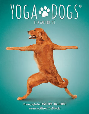 Yoga-Dogs1.jpg