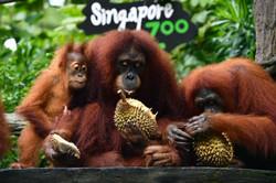 dt-singaporezoo-310817.jpg
