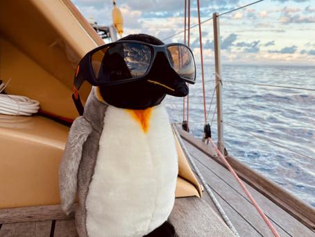 Jojo a sorti les lunettes de soleil