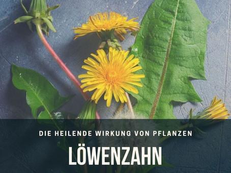 Heilende Pflanzen: Der Löwenzahn