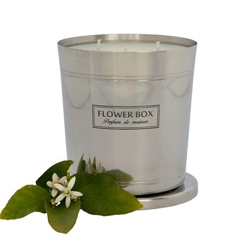 Fig Leaf & Cedar - 1kg Silver Candle