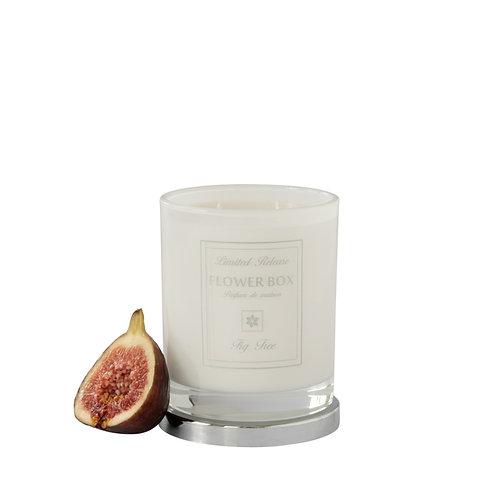 Fig Tree - Luminous White Candle
