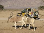 Desert Private Tour