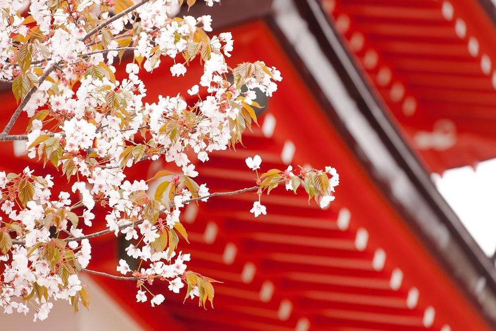 a.Spring.jpg