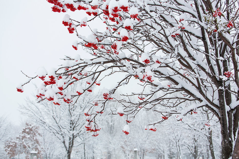 d.Winter.jpg