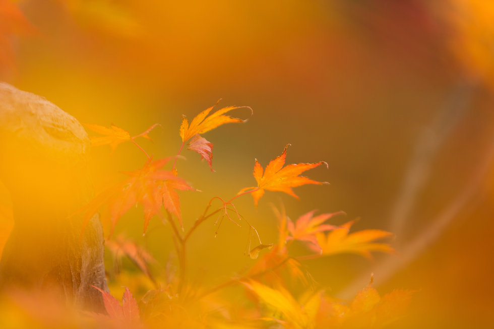 c.Autumn.jpg