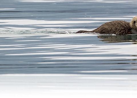 Northwestern Prince William Sound - College Fjords