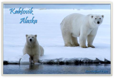 Arctic Beauties