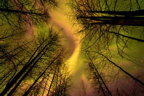 Treetop Treasure