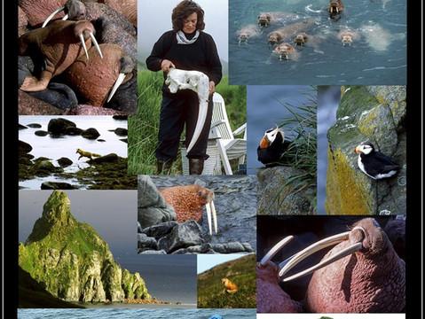 Walrus Islands