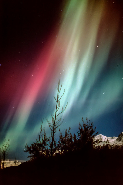 Celestial Symphony
