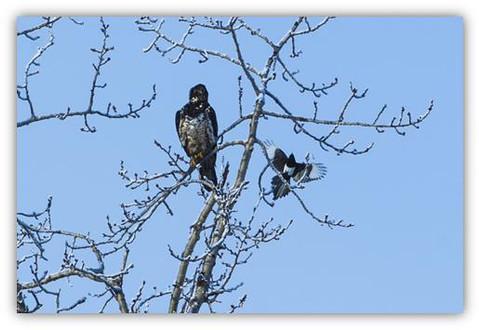 Eagle Story!