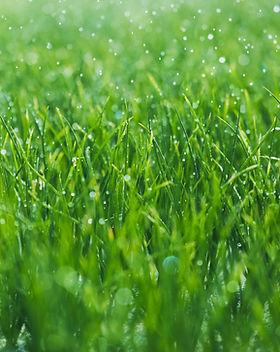 herbe humide