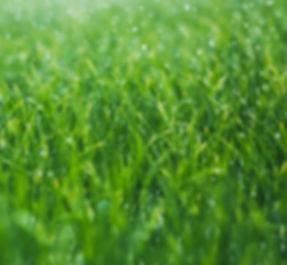 Grüner Star