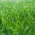 תרגול הגשם המטיב בהנחיית פרופ' נורית ירמיה לזהות, לקבל, לחקור ולהטיב עם עצמנו