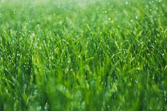หญ้าเปียก