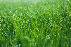 Lawn Care, seeding, sodding, insect & disease grass