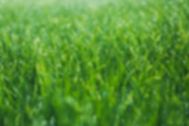 lawn Mowing services in townsville, Mystic Mowing,