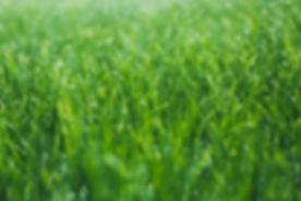 Nasses Gras
