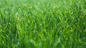 Your Guide to a Great Lawn