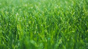 Раньше трава была зеленее