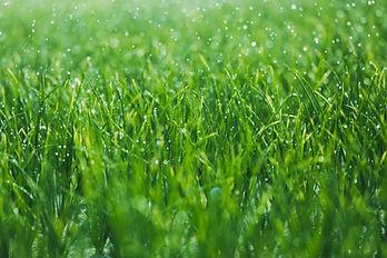 grama molhada
