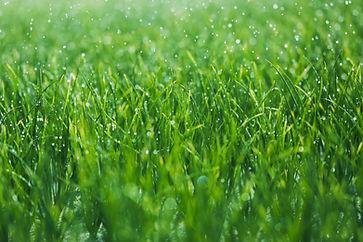 weeds fertilizer ants albany ga