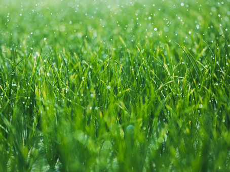 Are Lawns Environmentally Sound?