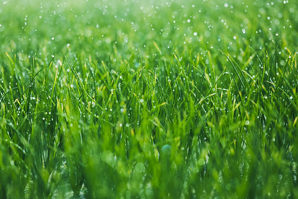 젖은 잔디