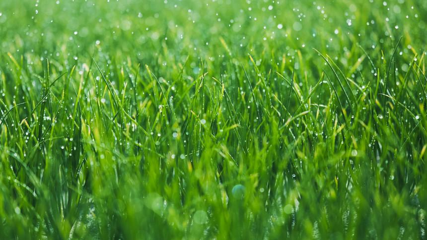 Green wet grass.