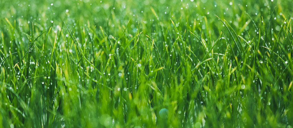 ECO-FRIENDLY TIPS FOR EARLY SPRING LAWN CARE
