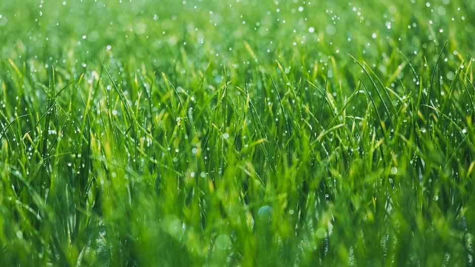 Das berühmte Gras auf der anderen Seite