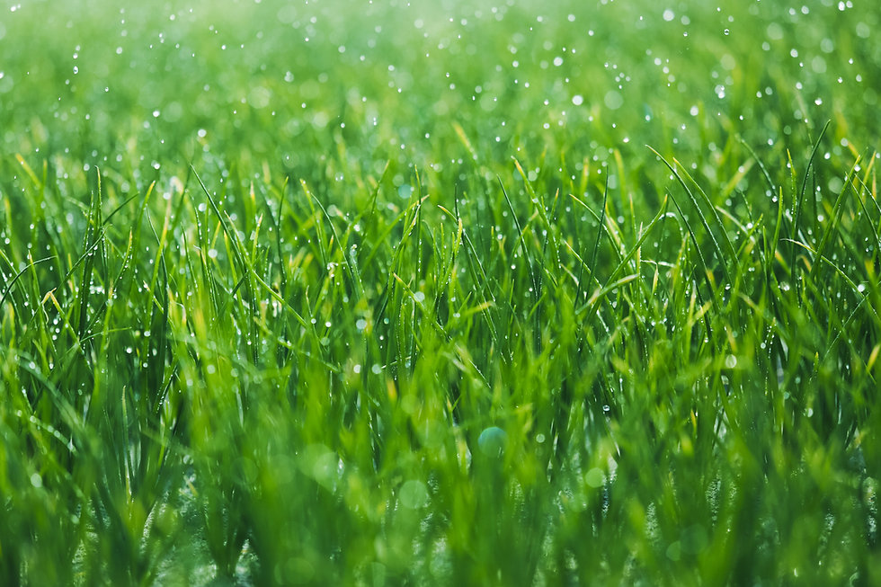 Wet, green grass. Fresh Nest Green Cleaning services are eco-friendly.