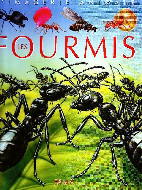 L'imagerie animale - Les fourmis